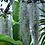 Thumbnail: spanish moss