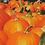 Thumbnail: pumpkin spice