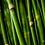 Thumbnail: bamboo