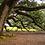 Thumbnail: angel oak