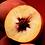 Thumbnail: southern peach