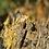 Thumbnail: agarwood