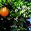 Thumbnail: orange blossom