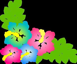 hibiscus-clipart
