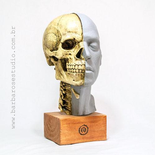 Crânio e face humana