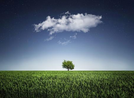 Tu B'Shvat and the Spirit of Creation