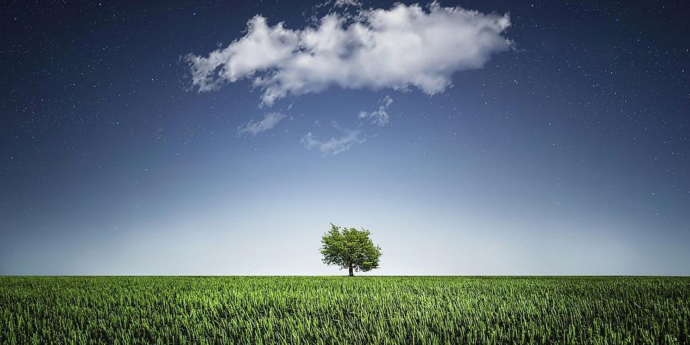 Entrepreneurs' Tu B'Shvat Seder: The New Year of the Trees