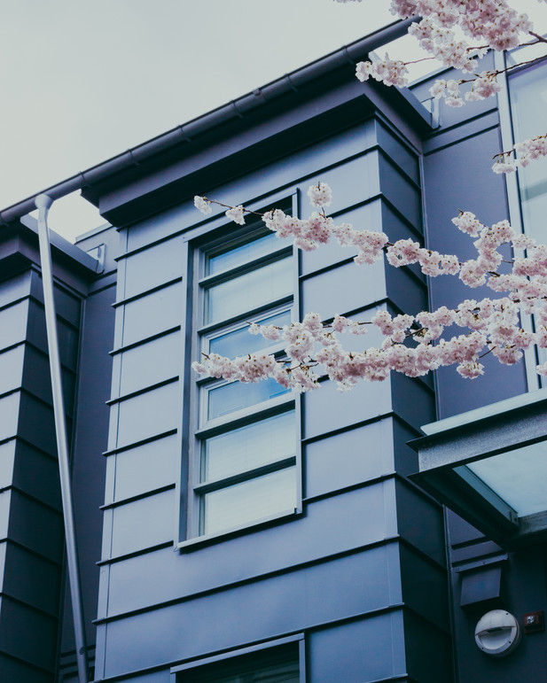 CHERRY BLOSSOMS.jpg