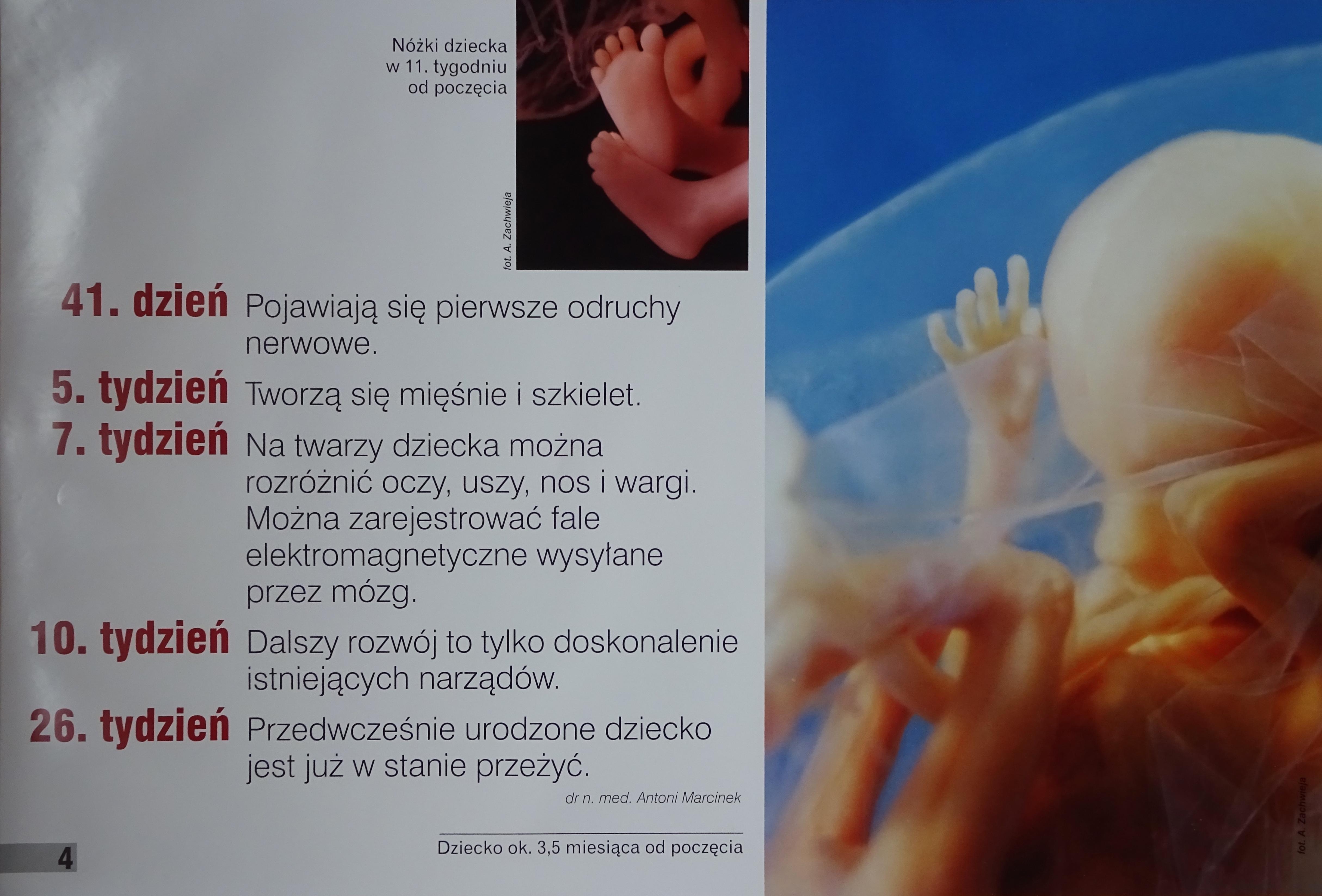 Rozwój dziecka (skrótowo) cd.