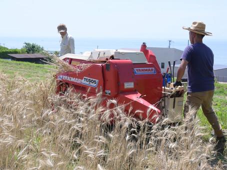 小麦の収穫2021