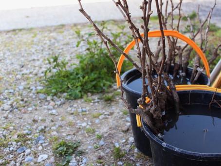 森信ヴィンヤード植樹式