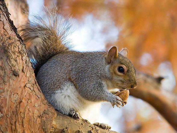 squirrel-wallpaper-1.jpg