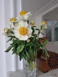 fleurs 1.jpeg