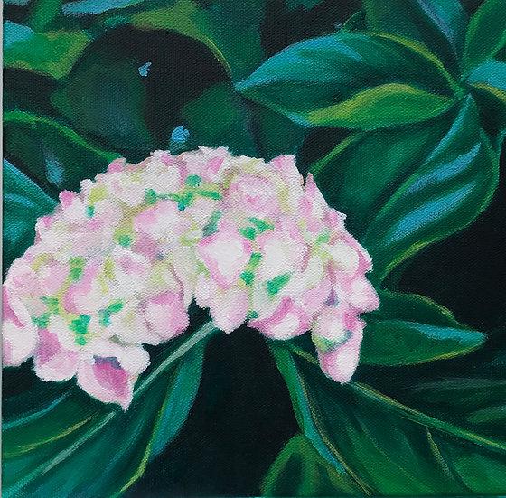 hydrangea painting pink