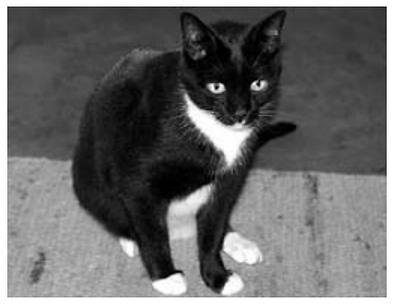 cat.svg