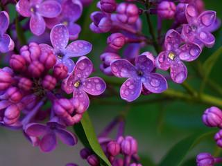 Top 10 California Friendly Plants