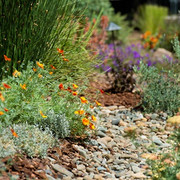 Ten Ways to Conserve Water with Your Landscape
