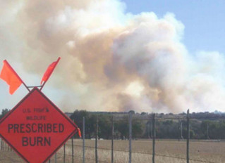 3 Key Benefits of Prescribed Burns by Fire Protection Services