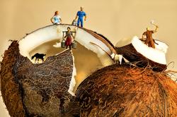 Kokusmilch-Bauern