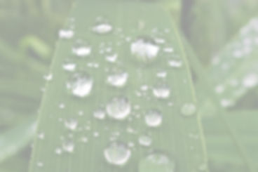 raindrop-2467642_1920_edited.jpg