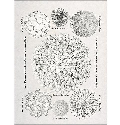 Dreams Taxonomy Print