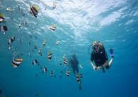 diving-maldives-hurawalhi-prodivers-1600