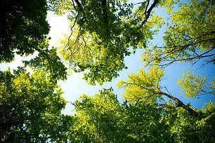 Tylko drzewa szumiały