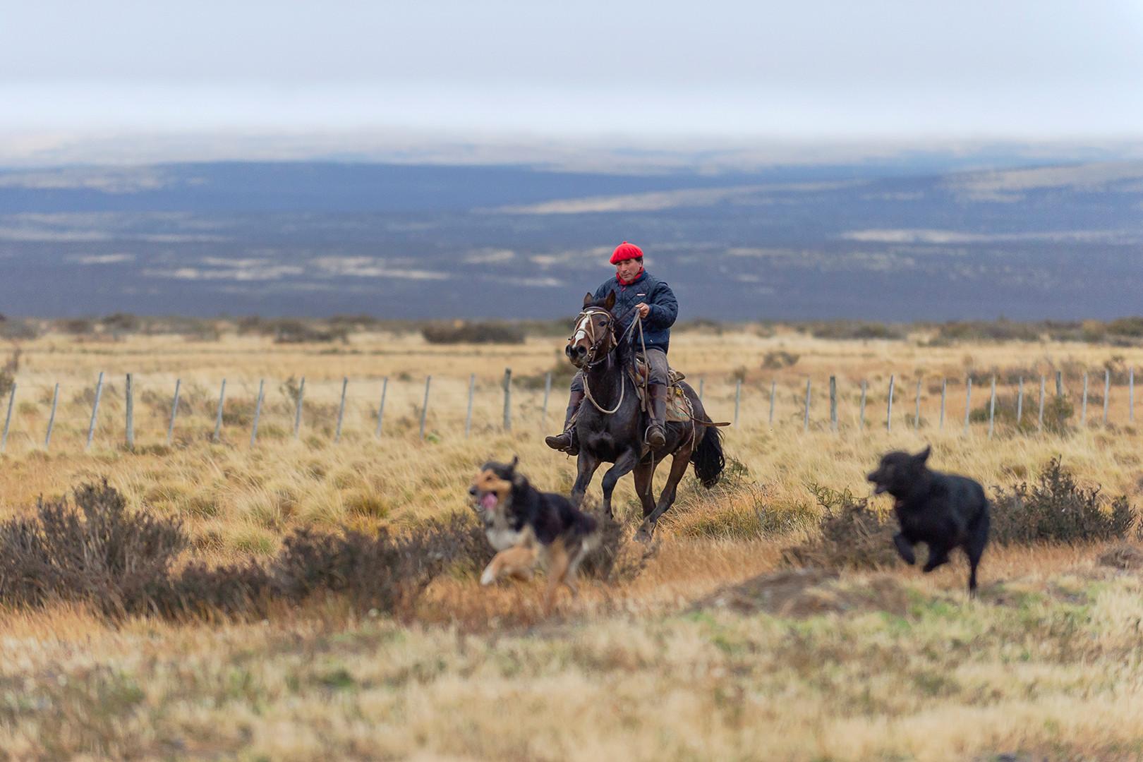 Gaucho a caballo, Estancia Cerro Guido
