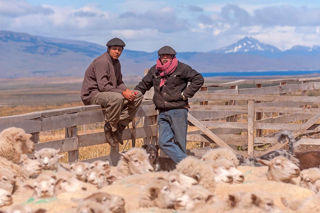 Gauchos y ovejas, Estancia Cerro Guido