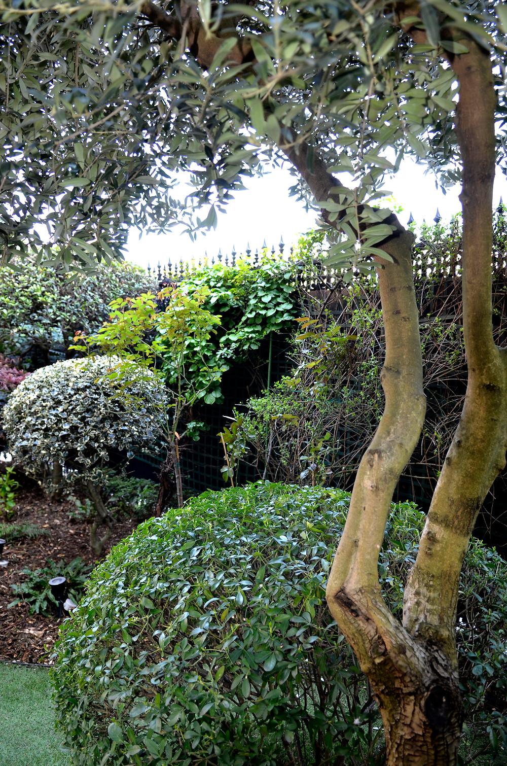 #paysagiste #gardendesign #citygarden #jardinsecret #instagardenlovers #urbangarden #urbanjungle #jardindeville #paris #creationjardin #natureinthecity #ecrindejardin #parisvert #greengarden #gardenlove #beauty #GardenGoals #garden #gardenstyle #landscapearchitecture #gardenparis