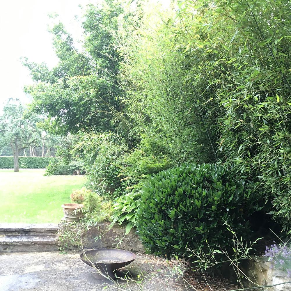 #paysagiste #gardendesign #greengarden #beaujardin #printemps #jardinrégionparisienne #houdan #montfortlamaury #nogentleroi #floraison #végétation #ouestparisjardin