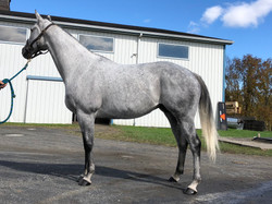 Broodmare by Holy Bull