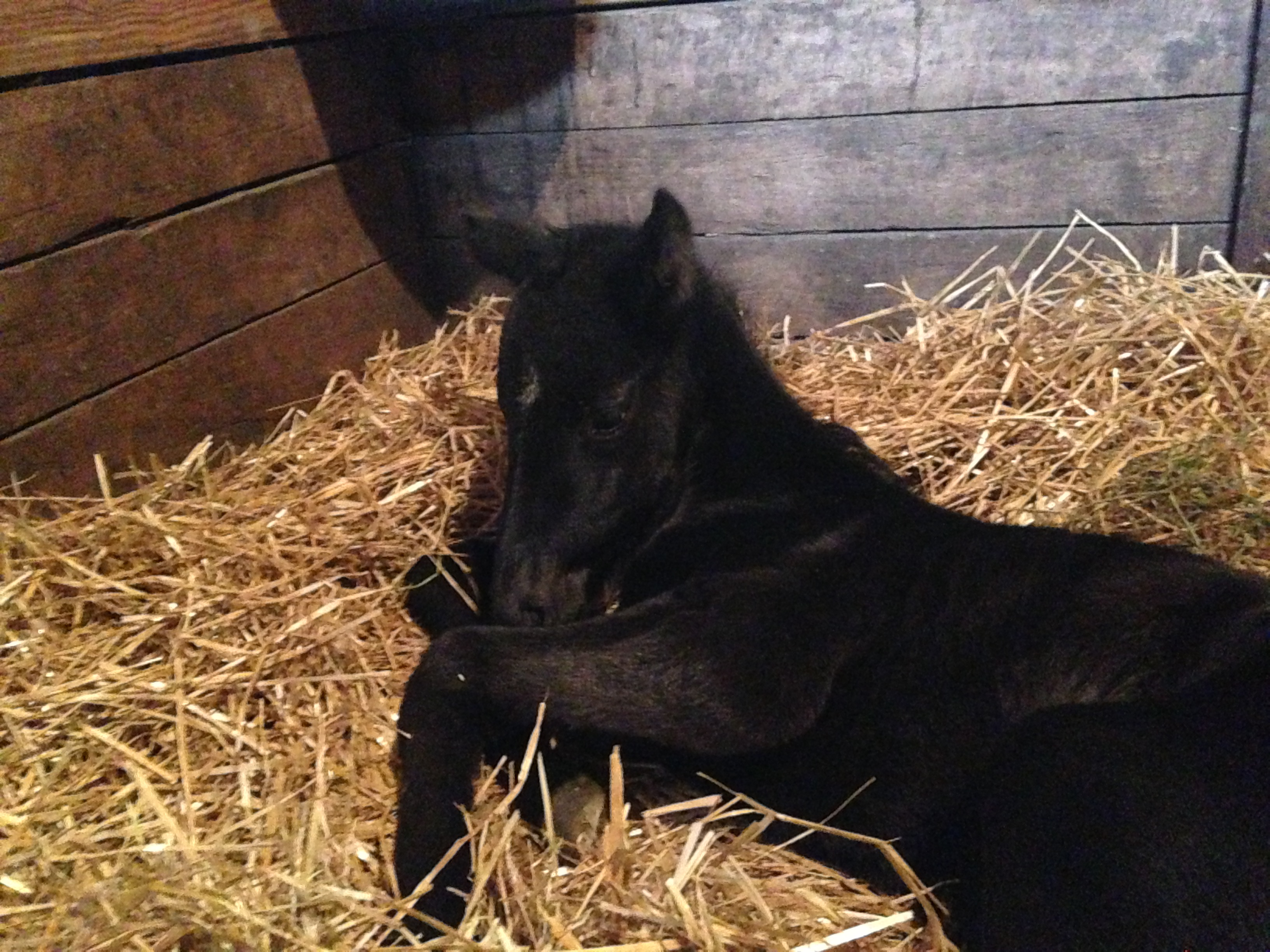 Filly by Scat Daddy