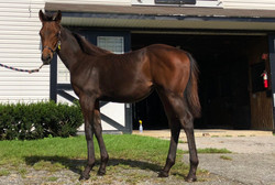 Filly by Congrats