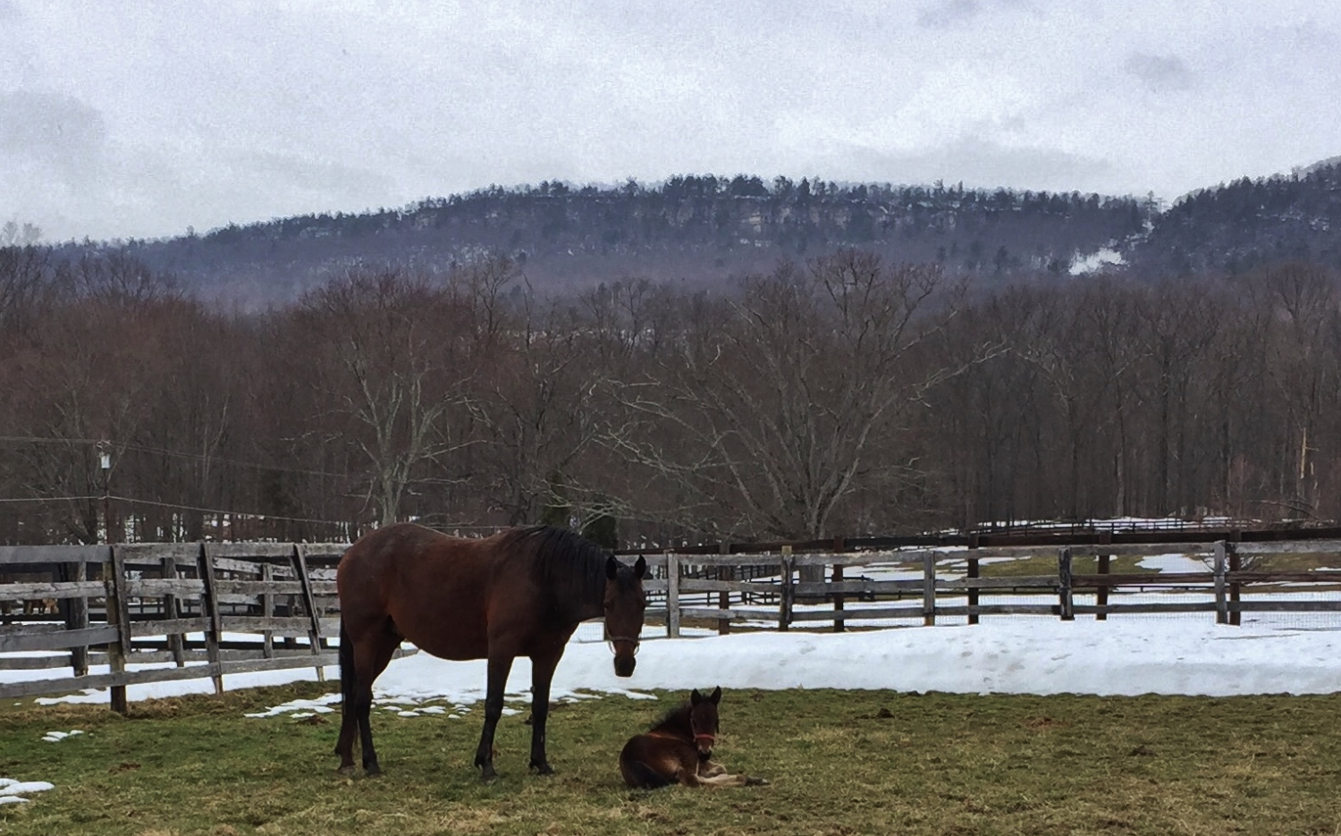 Handsoffmycookie and colt