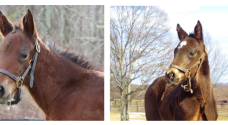 "Let the ""Foaling Season"" Begin !"