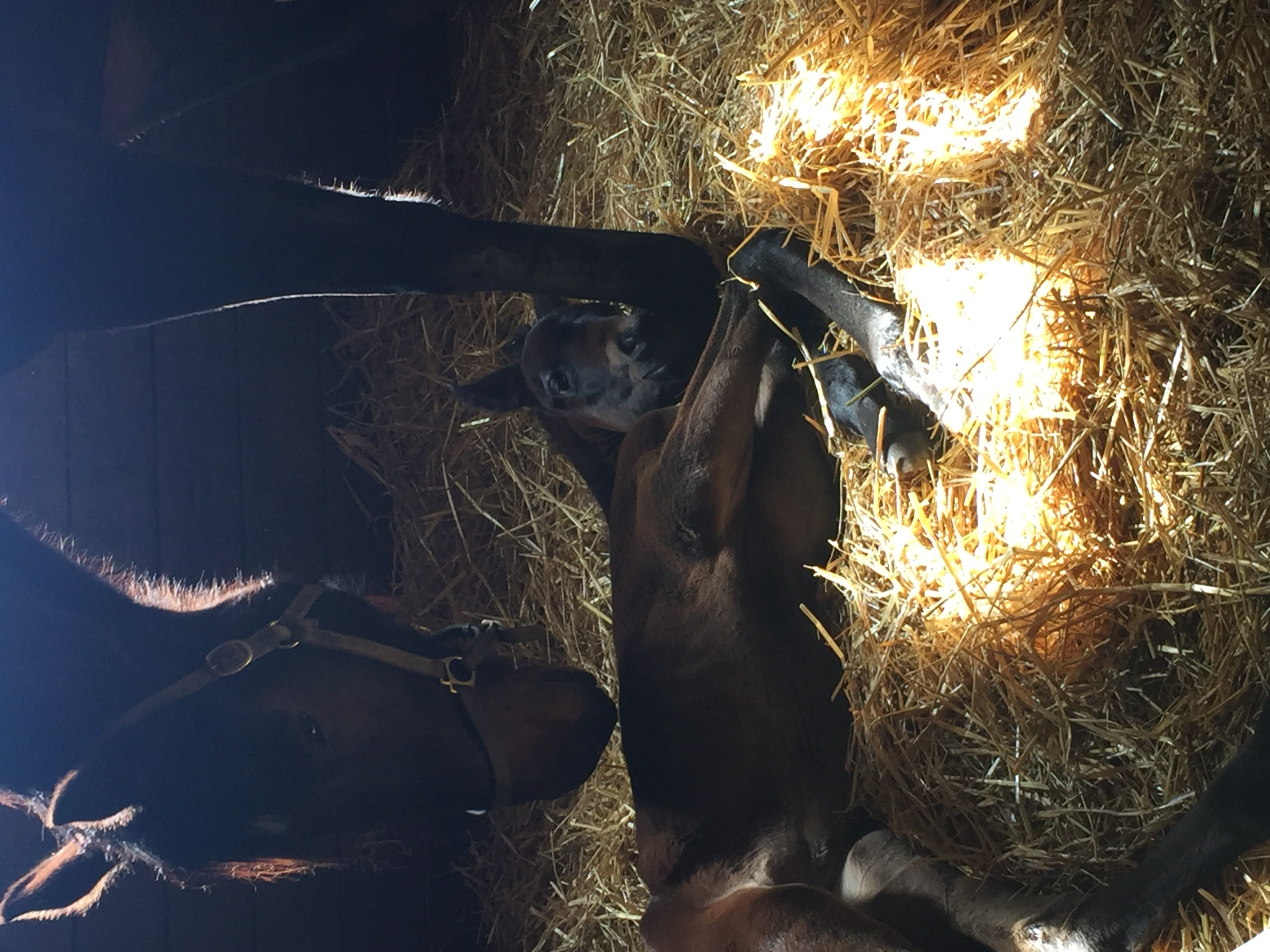 Filly by Trickmeister