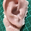 Thumbnail: Severed gelatine ear