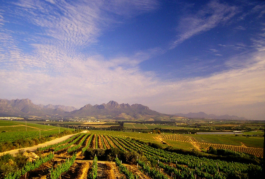 Rota dos Vinhos Stellenbosch.jpg