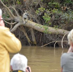 pantanal8.jpg