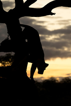Andius Teijgeler - Zuid Afrika