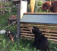 Iona & Meerschweine.jpg