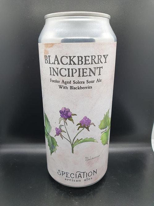 Blackberry Incipient (2021) - Sour Ale