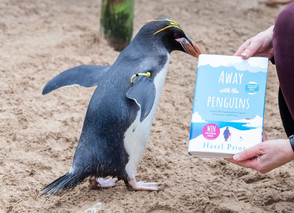 Hope from the Penguins