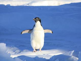 From Exmoor to Antarctica