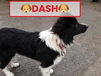 Emily's dog Dash.jpg