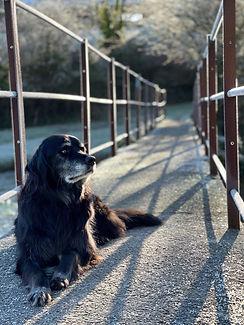 Rosanna's dog Sam.jpg