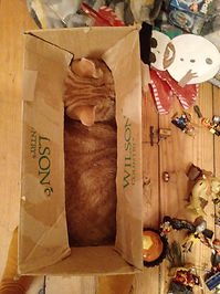 Jacob cat in box.jfif