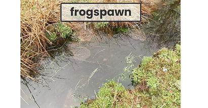Frogspawn (Emily & Sarah).jfif