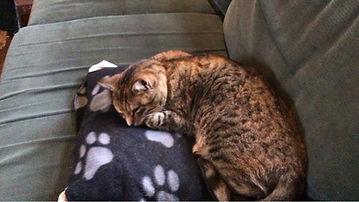 Gabriel's cat.jfif
